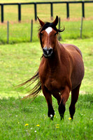 268, Beautiful Running Horse, Animal Photography