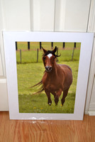 Matted 16x20 photo of a running horse. Sale $50.00 +S/H