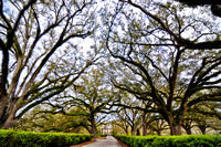 Oak Alley Plantation in Vacherie, Louisiana