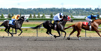 Emerald Downs Washington Horse Racing, sport photography, animal photography, 08-21-2016, 0030
