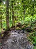 Heather Lake Trail, Washington, Nature Photography, 06-25-2016, 113406