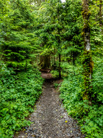 Heather Lake Trail, Washington, Nature Photography, 06-25-2016, 113211