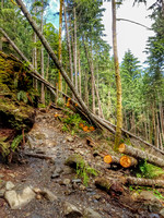 Heather Lake Trail, Washington, Nature Photography, 06-25-2016, 113814