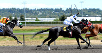 Emerald Downs Washington Horse Racing, sport photography, animal photography, 08-21-2016, 0031