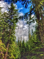 Lake Twenty-two Trail, Washington State, nature photography, 06-15-2016, 105808