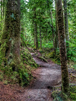 Heather Lake Trail, Washington, Nature Photography, 06-25-2016, 113237