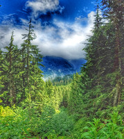 Lake Twenty-two Trail, Washington State, nature photography, 06-15-2016, 105210