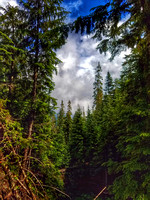 Lake Twenty-two Trail, Washington State, nature photography, 06-15-2016, 105802