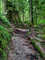 Heather Lake Trail, Washington, Nature Photography, 06-25-2016, 113245