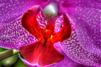 250, Purple Orchid, Flower Photography