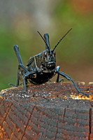 """pictures of all kinds of small critters and bugs"",""photos of bugs"",""cool photos of bugs in pensacola florida"",""nasty bugs"",""gross bugs"", ""Beautiful and cool photos of bugs"",""cool pics of bugs"",pics"