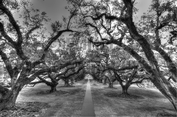 13 oak alley plantation in vacherie louisiana hdr photography black and white photography