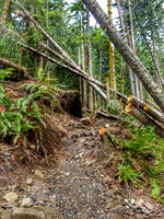 Heather Lake Trail, Washington, Nature Photography, 06-25-2016, 113821