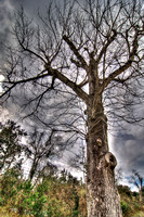 02-17-2014, Fairhope,  Alabama, hdr, DSC_07707