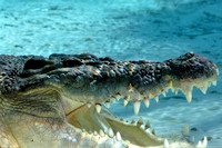 Alligator farm at St Augustine Florida, 04-29-2014, 5798, Animal Photography