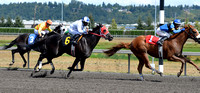 Emerald Downs Washington Horse Racing, sport photography, animal photography, 08-21-2016, 0027