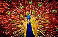 4, Glowing effect, Peacock feathers, cool photoshop effect